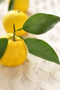フランスで流行っている「日本の柑橘類」とは?