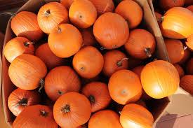 Pourquoi les citrouilles à Halloween ? どうしてハロウィンにはカボチャ?