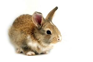 ウサギの一撃!?「Le coup du lapin」ってどういう意味?