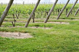 ワインの基礎を知る5つのポイント!ワイン4種類の特徴を解説!