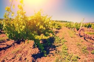 フランスのワイン産地が有名になった理由とは?ワインの法律って何?