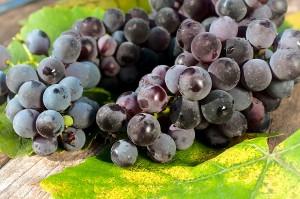 ワインはどうやって造られる?味わいを変化させる4つの理由!