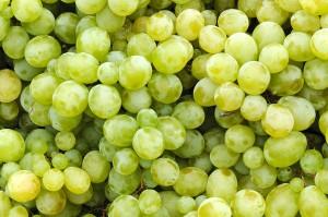 味の違いを知ろう!代表的なブドウ3品種をご紹介<白ワイン編>