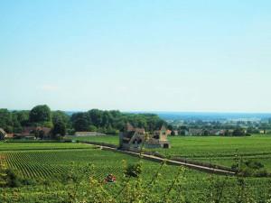 【フランスワイン巡り】ブルゴーニュワインの特徴とおすすめをご紹介