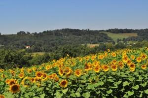 【フランスワイン巡り】ワインの穴場!南西地方のおすすめ銘柄5選!