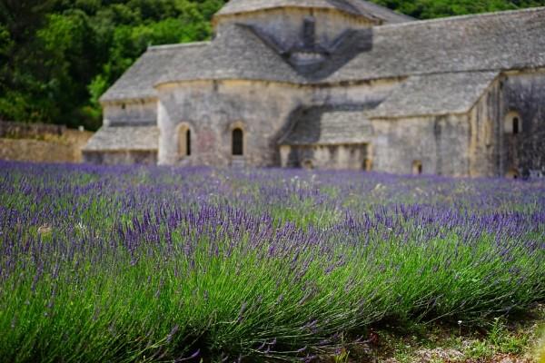 【フランスワイン巡り】南フランスのワインの特徴とおすすめの飲み方