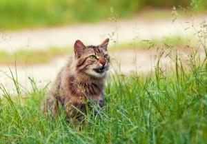 """猫かと思ったら…""""tomber à la renverse""""した出来事"""