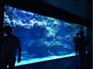 子供に大人気!「モナコ海洋博物館・水族館」の見どころや楽しみ方