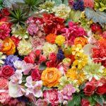 敷き詰められた花