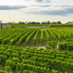 フランスワイン 温暖化の影響