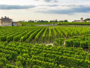 フランスワイン《温暖化に強いブドウ》で救えるか?