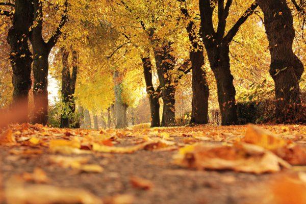 l'automne verlaine