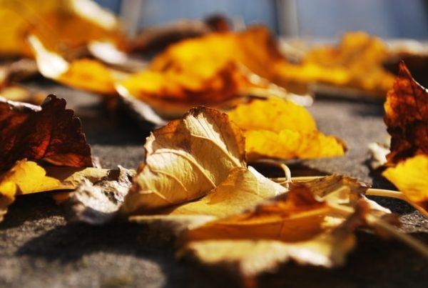 晩秋におすすめの詩 プレヴェール