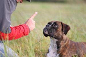 「お手」ってどう言うの、犬をしつけるときに使うフランス語